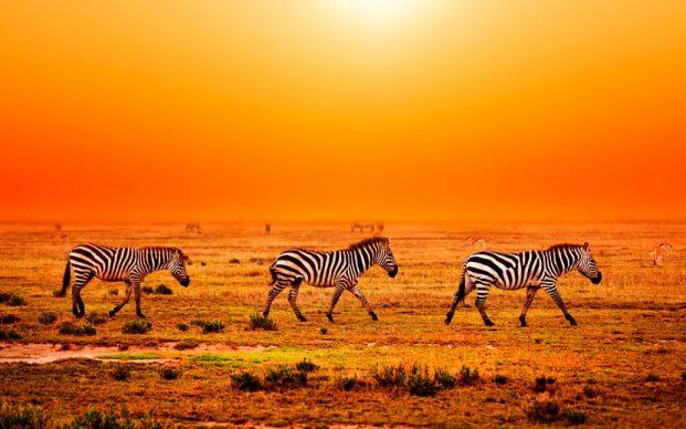 Визы в Африку