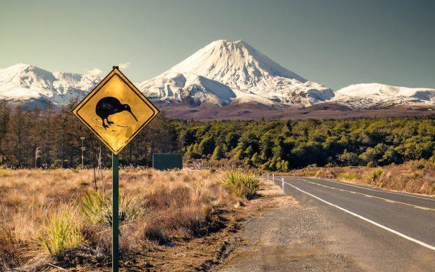 new-zeland-kiwi