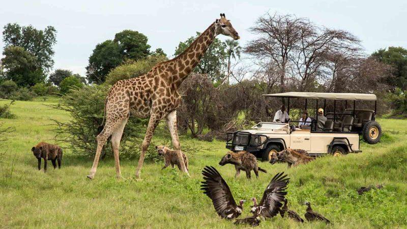 Тур в Ботсвану