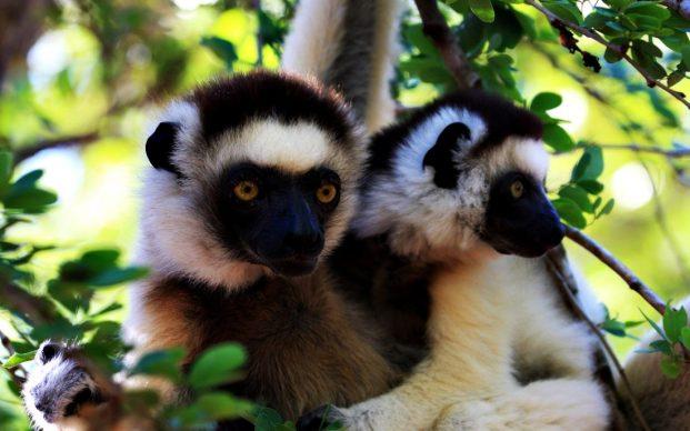 Тур на Мадагаскар