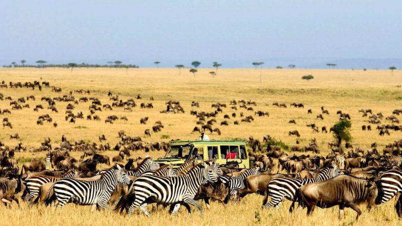 Тур в Танзанию
